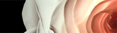lr-perfumes-m